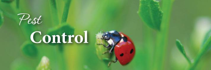 pestcontrolbanner